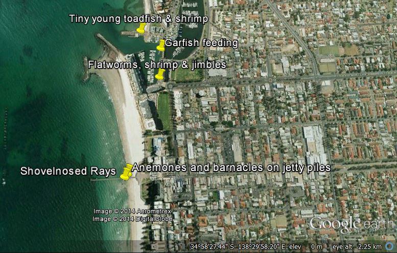 Glenelg night walk sighting locations, Nov 29th 2014