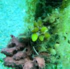 a-star-droppers-living-coverfishing-linebetween-old-new-rapid-bay-jettiesmlssa-dive26-11-16dsmipict7771