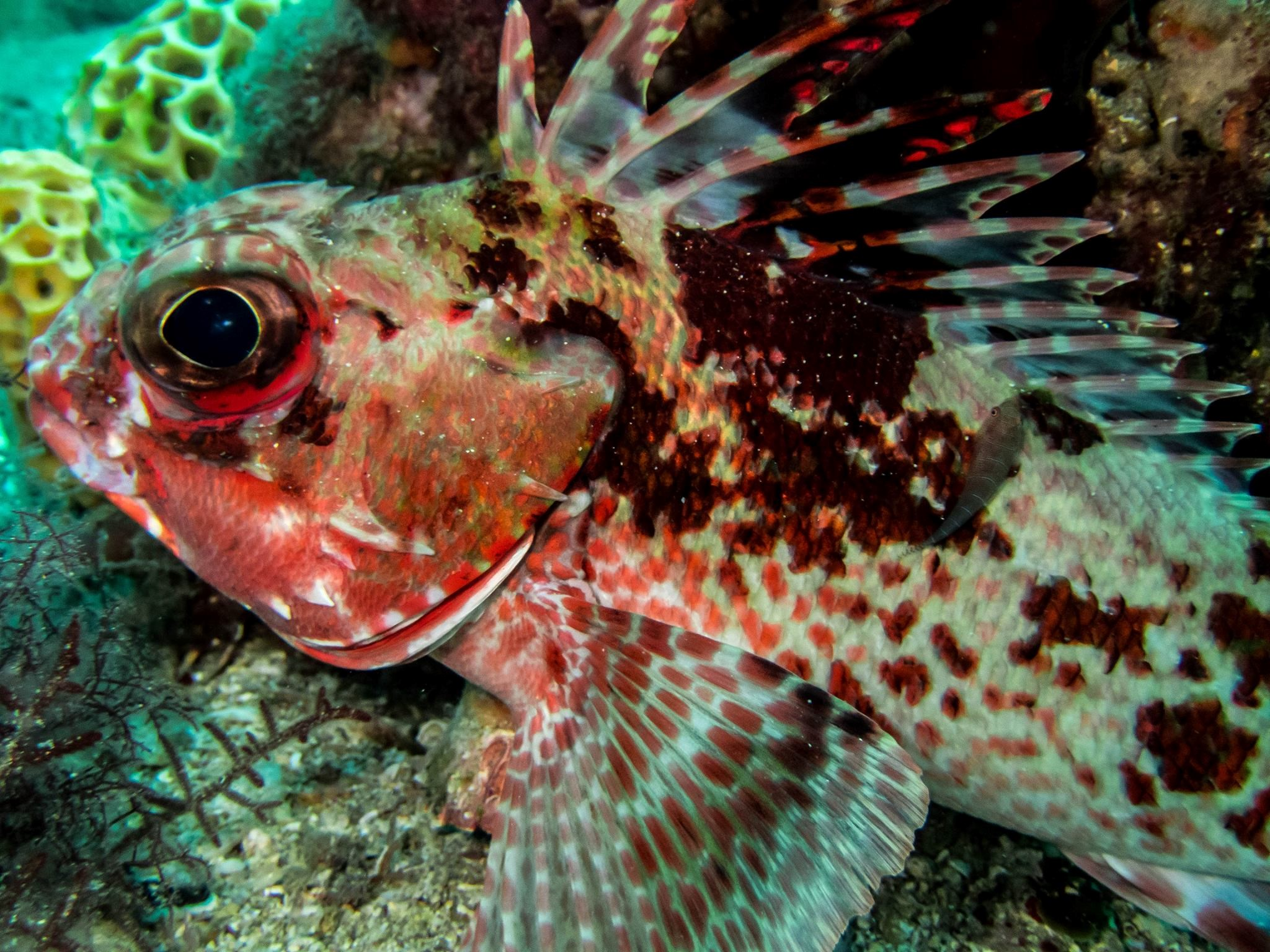 The study of fish cleaning behaviour in south australian for Fish cleaning station near me